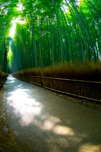 陽光射す嵯峨野の竹林の道の写真素材 [FYI03219732]