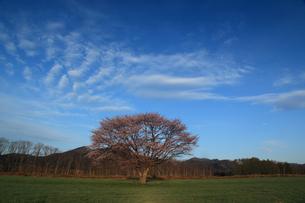合格の木の写真素材 [FYI03219879]