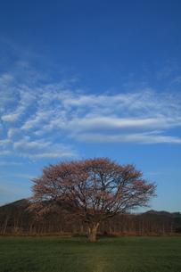 合格の木の写真素材 [FYI03219917]