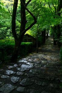 雨に濡れるの寂光院参道の石段の写真素材 [FYI03220085]