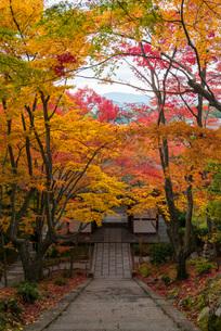 紅葉の色が鮮やかな京都・常寂光寺仁王門の写真素材 [FYI03220165]