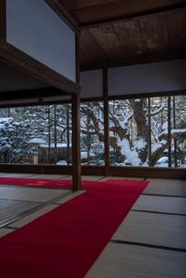 真っ白の雪景色に変わった京都大原・宝泉院の五葉松の写真素材 [FYI03220213]