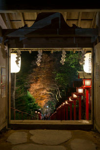 夜の闇にライトアップされる貴船神社参道の紅葉の写真素材 [FYI03220328]
