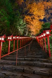 夜の闇にライトアップされる貴船神社参道の紅葉の写真素材 [FYI03220331]