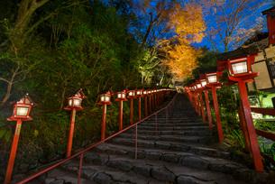 夜の闇にライトアップされる貴船神社参道の紅葉の写真素材 [FYI03220338]