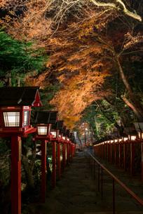 夜の闇にライトアップされる貴船神社参道の紅葉の写真素材 [FYI03220340]