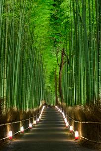 静かな嵐山の竹林の夜を鮮やかに照らす灯籠の灯りの写真素材 [FYI03220379]