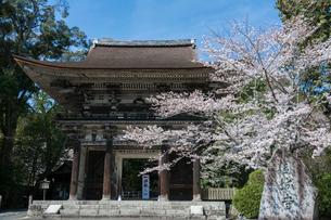 三井寺仁王門と桜の写真素材 [FYI03220486]