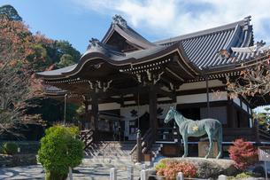 橘寺,本堂と聖徳太子の愛馬黒駒像の写真素材 [FYI03220513]