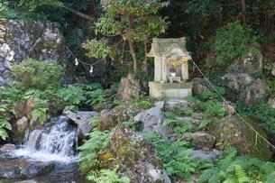 伊吹山麓 泉神社の湧水(源泉)の写真素材 [FYI03220528]