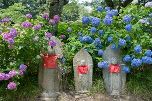 矢田寺の地蔵とアジサイの写真素材 [FYI03220535]