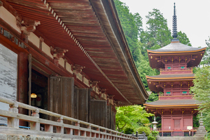 長命寺三重塔と本堂の写真素材 [FYI03220545]