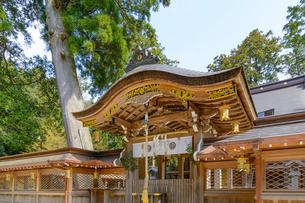 田村神社本殿(滋賀県)の写真素材 [FYI03220562]