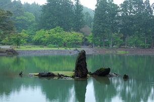 毛越寺 浄土庭園 大泉が池の写真素材 [FYI03220564]