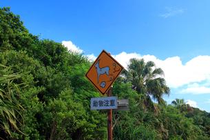 野羊注意 標識 夜明道路 父島の写真素材 [FYI03221175]