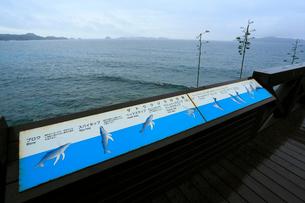 ザトウクジラの行動案内板 御幸之浜 母島の写真素材 [FYI03221659]