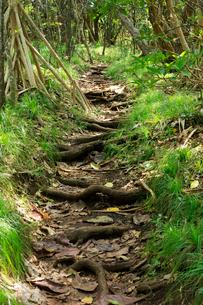 南崎への道 タコノキ 母島の写真素材 [FYI03221695]