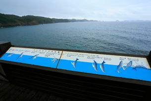 ザトウクジラの行動案内板 御幸之浜 母島の写真素材 [FYI03221736]