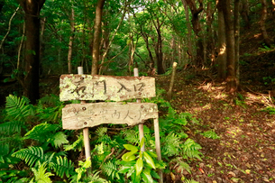石門入口 山道 母島の写真素材 [FYI03221798]