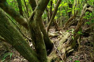 石門 母島の写真素材 [FYI03221861]