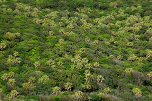乾性低木林 湿性高木林 湿性型媛低木林の写真素材 [FYI03221937]