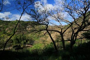 中山峠山道より八ツ瀬川 森林生態系保護地域 小港海岸 父島の写真素材 [FYI03221951]