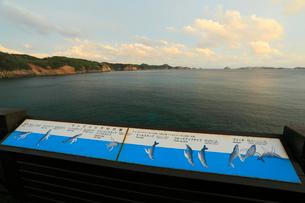 ザトウクジラの行動案内板 御幸之浜 母島の写真素材 [FYI03222045]