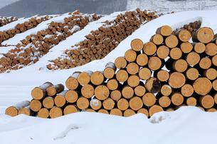 冬の材木の写真素材 [FYI03222259]