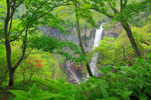 奥日光の新緑と華厳ノ滝の写真素材 [FYI03222588]