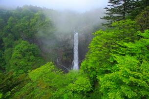 奥日光の新緑と華厳ノ滝の写真素材 [FYI03222590]