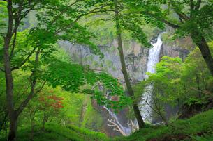 奥日光の新緑と華厳ノ滝の写真素材 [FYI03222638]