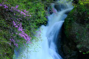 トウゴクミツバツツジと竜頭ノ滝の写真素材 [FYI03222675]