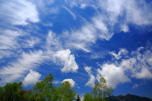 ダケカンバと雲の写真素材 [FYI03222678]