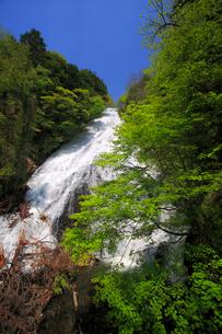 湯滝と新緑の奥日光の写真素材 [FYI03222692]