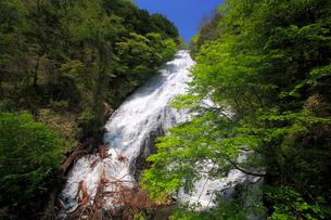 湯滝と新緑の奥日光の写真素材 [FYI03222696]