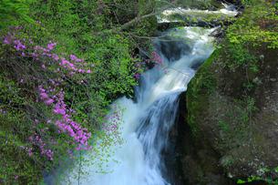 トウゴクミツバツツジと竜頭ノ滝の写真素材 [FYI03222702]