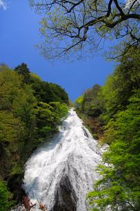 湯滝と新緑の奥日光の写真素材 [FYI03222703]