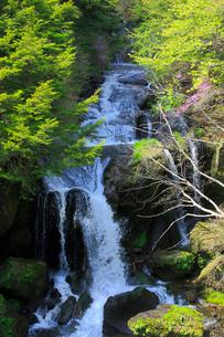 新緑の竜頭ノ滝の写真素材 [FYI03222705]