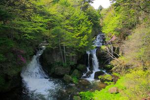 新緑の竜頭ノ滝の写真素材 [FYI03222713]
