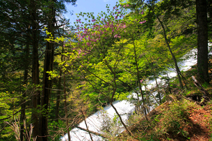 湯滝と新緑の奥日光の写真素材 [FYI03222716]
