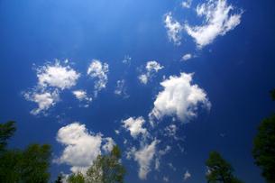 ダケカンバとちぎれ雲の写真素材 [FYI03222718]