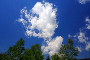 ダケカンバとちぎれ雲の写真素材 [FYI03222721]