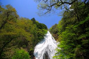 湯滝と新緑の奥日光の写真素材 [FYI03222723]