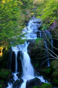 トウゴクミツバツツジと竜頭ノ滝の写真素材 [FYI03222726]