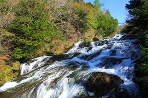 新緑の竜頭ノ滝の写真素材 [FYI03222729]