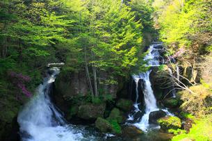 新緑の竜頭ノ滝の写真素材 [FYI03222747]