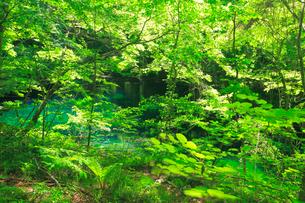 新緑の沸壷の池の写真素材 [FYI03223069]