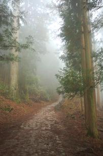 吉野山,奥千本西行庵への参道,西行法師の写真素材 [FYI03223146]