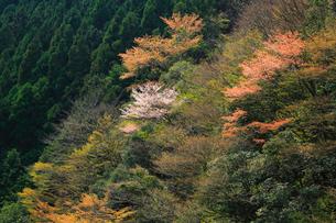 白六山の春の写真素材 [FYI03223155]