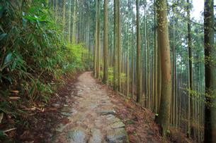 吉野山,奥千本西行庵への参道,西行法師の写真素材 [FYI03223159]
